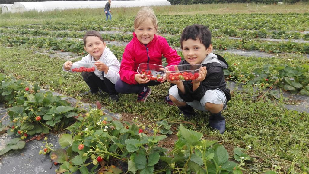 Cueillette et tartes aux fraises été 2017 (4)