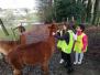 Visite des Alpagas